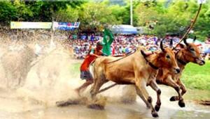 Southeast Asia 2011: Vietnam events and festivals