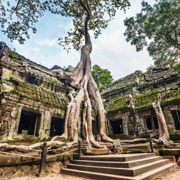 Trees in the temples of Angkor Wat
