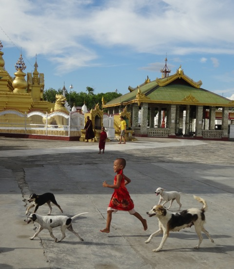 Monk with dogs at temple